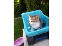 kitten look for home boy