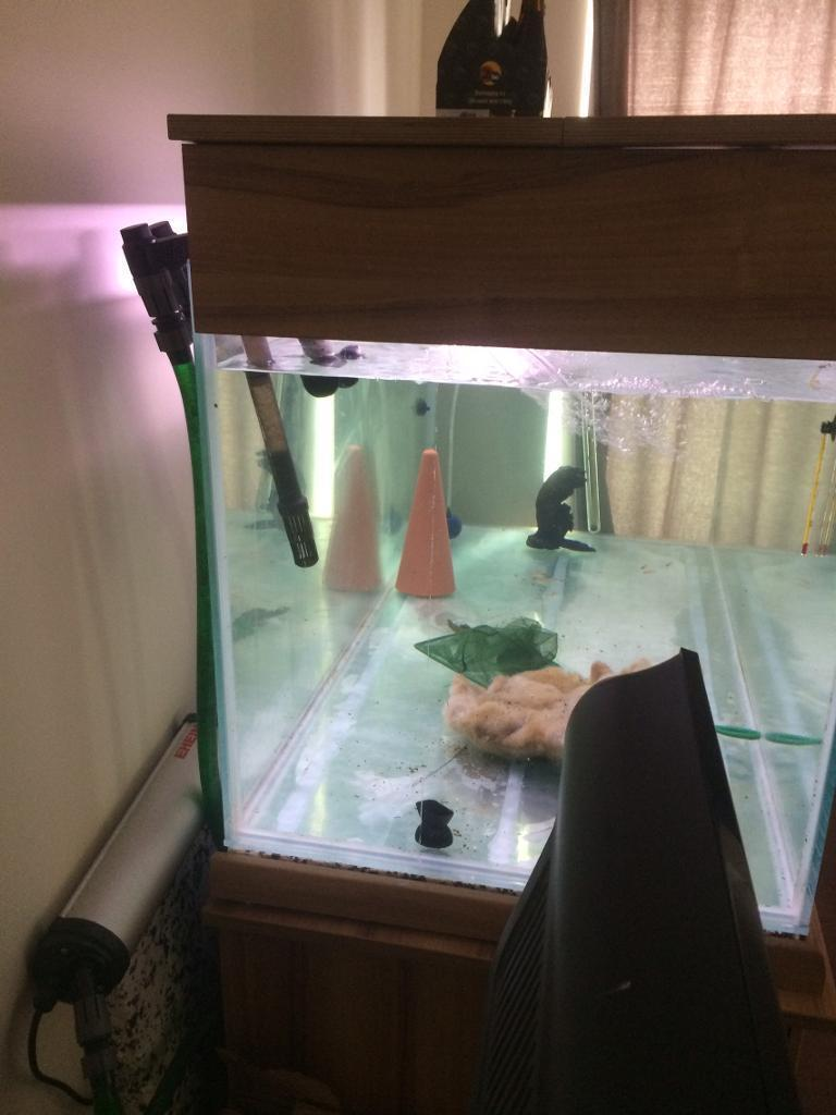 Aquarium fish tank for sale in london - Fish Tank For Sale 5x2x2 Image 1 Of 3