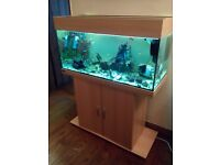 Fish tank with tropical fish, Eheim 180L complete setup.