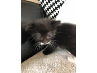 Three beautiful kittens for sale