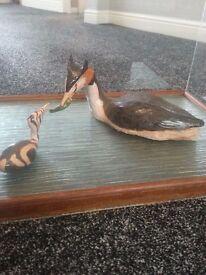 artist bird in display cabinet