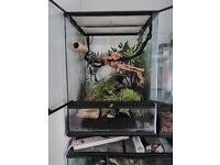 Male Crested Gecko with ExoTerra set up