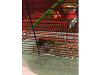Gerbils and cage free to good home