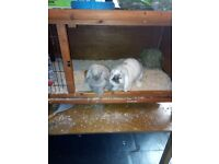 Male n female rabbits