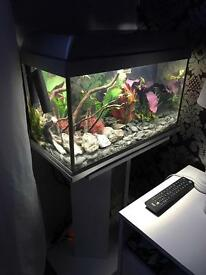 60L Fishtank and Stand