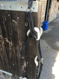 5 Point Black Shires Martingale