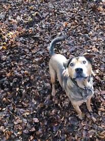 Dog training, daycare & behaviour