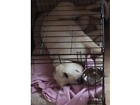 Medium size dog cage excellent condition