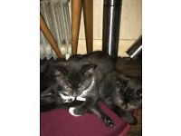 Kittens - 8 Weeks old in need of new homes now