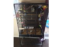 6 budgies and large cage