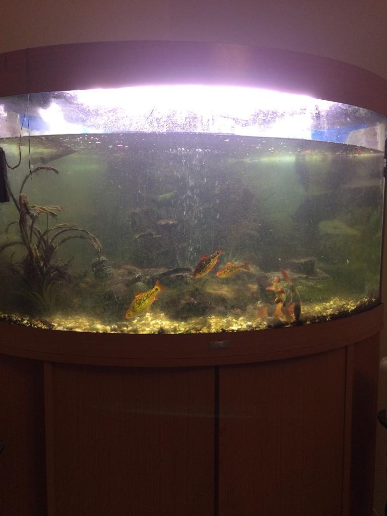 Aquarium fish tank northamptonshire - Aquarium Fish Tank Northamptonshire