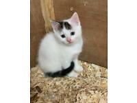Half bengal kitten. So cute, 1 girl