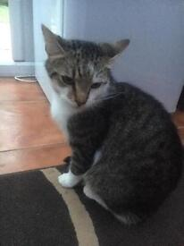 2 male cats need to be rehomed