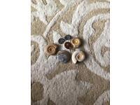 Real ammonites