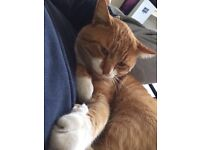 Missing ginger cat in Leyton! Please help! :(