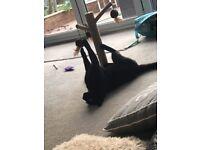 Rosie cat is missing! Please help!