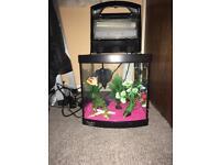 Aqua one fish tank set up