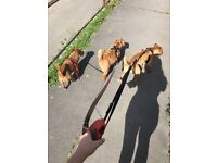 Professional Dog Walker In/Around Calne