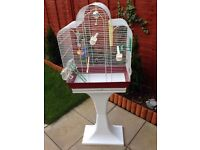 Bird Cage Quick Christmas Sale