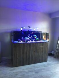Aqua evolution 1500 full set up