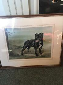 STAFFORDSHIRE BULL TERRIER STAFFY PICTURE