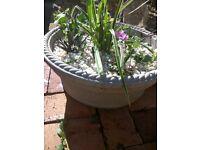 Plants Hardy perennials