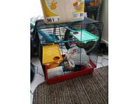 Hamster, rat cage