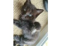 Gorgeous Kittens - 1 x girl and 1 x boy