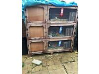Hutch and rabbits for sale