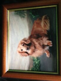 Photo Print of Longhaired Golden Dachshund Reduced now £10.00