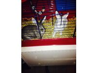 Two rabbits for sale comes with indoor and outdoor cages both for £20 pounds