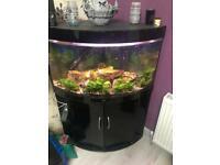 Juwel corner fish aquarium