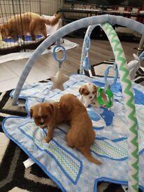 Mixed litter of pups