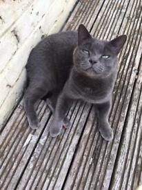 I need a loving home for Sooty