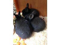 lovely baby rabbits