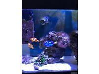 125 Lt JEWEL Fish Tank with set up for marine aquarium