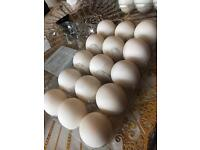 Special Duck Eggs! Only £3.20