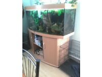 Five ft Bow fronted jewel aquarium