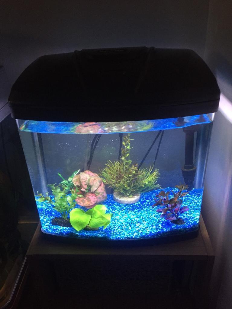 Aqua One 28 Litre Fish Tank Set Up And 2 Gold
