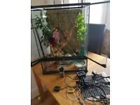 Exo terra Large vivarium reptile tank