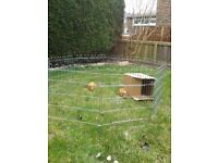 Playpen or outdoor run for guinea pigs or rabbits, with one water bottle and one food bowl
