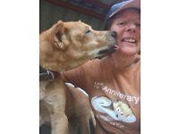 DOG WALKER/AND PET CARER.