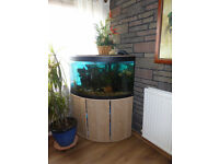 FLUVAL VICENZA 190 CORNER AQUARIUM IN CABINET FILTER PLUS LIVESTOCK 25 + MALAWI CICHLIDS..£350/200