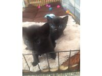 *******SOLD******2 Beautiful Fluffy Kittens ******SOLD*******