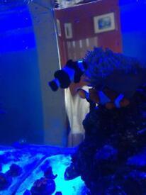 Marine fish with equipment etc