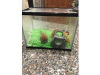 Starter fish tank. Comes with gravel, plant and fish ornament.