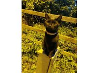 Are you missing lost a black cat
