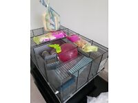 Hamster cage with accessories and food