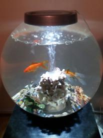 BiOrb 30L cold water fish tank plus accessories