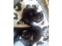 5 boy kittens